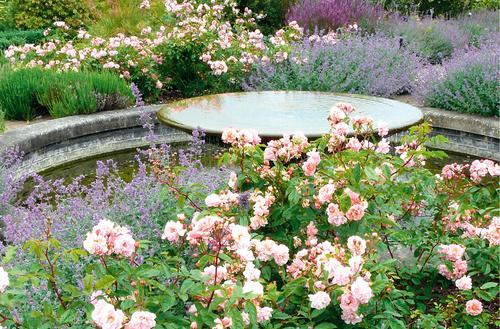 Pachnący ogród